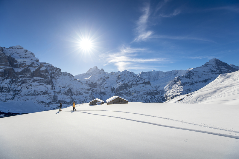 Making fresh tracks on Kleine Scheidegg.jpg